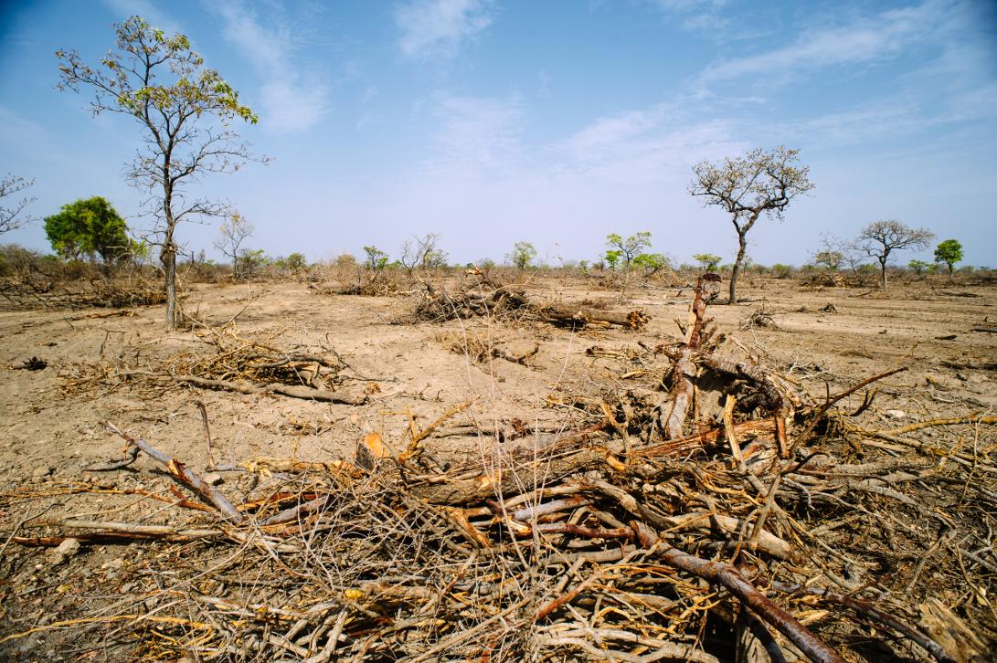 Die kapitalistische Zerstörung der Umwelt und  die ökosozialistische Alternative