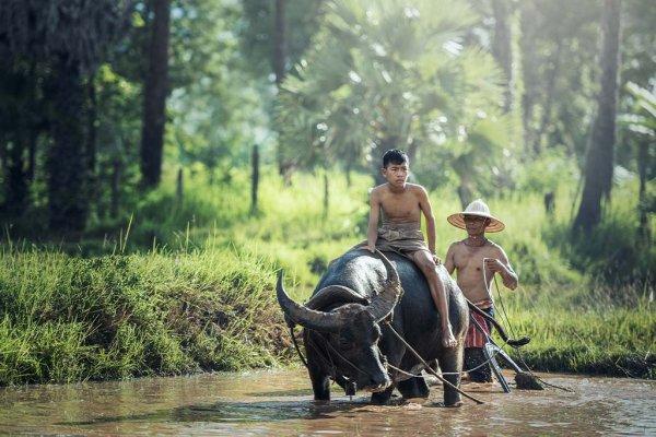 Junger Mann reitet auf Wasserbüffel, der vor zweitem Mann durch Fluss watet